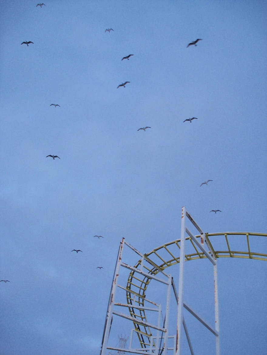 80. gulls over ride
